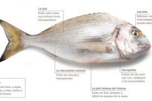 Infografia pescado fresco